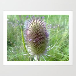 BEAUTY OF A BULLRUSH Art Print