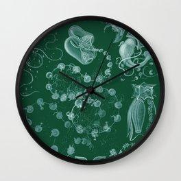Ernst Haeckel Siphonophorae Hydrozoan Wall Clock