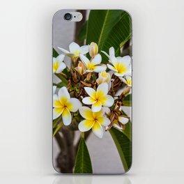 Plumeria Flowers iPhone Skin