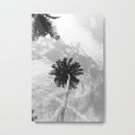 Palm Tree, San Blas Islands, Panama, Black & White Metal Print