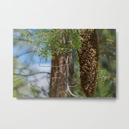 Bees on the wrong track Metal Print