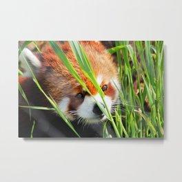 Red Panda 1 Metal Print