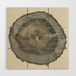 Stump Rings Wood Wall Art