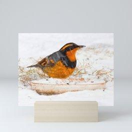 Varied Thrush in the Snow Mini Art Print