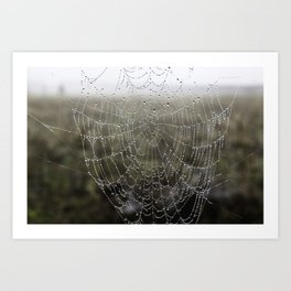 wet spider web Art Print