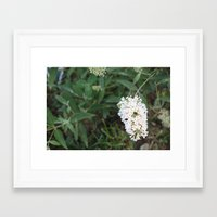 rileigh smirl Framed Art Prints featuring Daisies by Rileigh Smirl