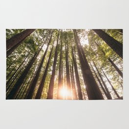 Forest at sunset Rug