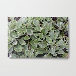 Green. Metal Print