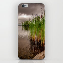 Driftwood And Cattails iPhone Skin