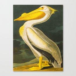 White Pelican Vintage Floral Botanical Animal Bird Art Canvas Print
