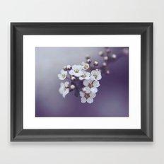 Flower in the mist Framed Art Print