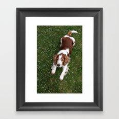 Welsh Springer Spaniel - Scott Framed Art Print