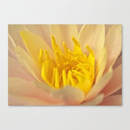 pinky yellow centre Canvas Print