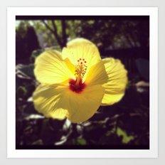 Summertime Flower Art Print