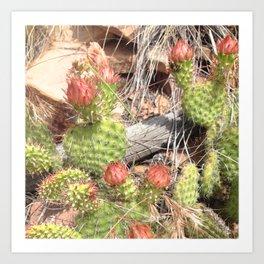 Watercolor Cactus, Prickly Pear 05, Boulder, Colorado, After Bloom Beauty Art Print