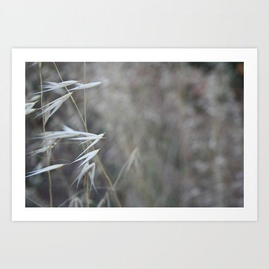 Macro photograph of wild grass sead heads shot in a Riviera garden in France Art Print