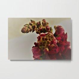 cranberry florals Metal Print