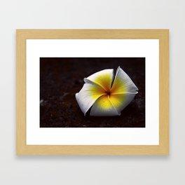 # 339 Framed Art Print