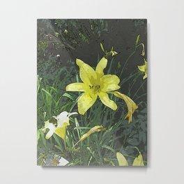 Yellow Lily DPGPA151014-14 Metal Print