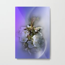 apple blossoms in spring -2- Metal Print