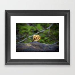 Fungal remains Framed Art Print