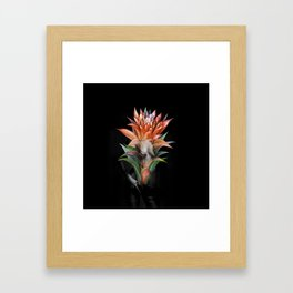 Erotic Guzmania flower Framed Art Print