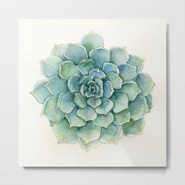 Succulent - Echeveria Metal Print