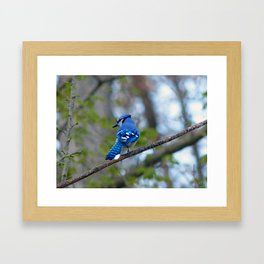 Showing his Colors Framed Art Print