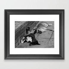 Greek Dogs Framed Art Print