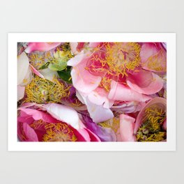 Peony in Water Print - Flower in Spring Wall Art - Floral Design - Collage of Flowers Photography Art Print