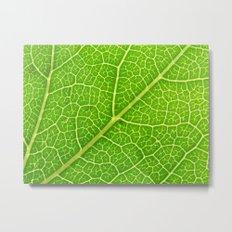 Green Leaf Veins 04 Metal Print