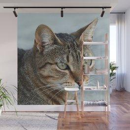Stunning Tabby Cat Close Up Portrait Wall Mural