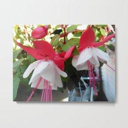 Fuchsia Fairies 1 Metal Print