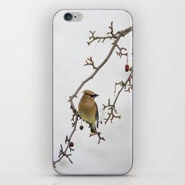 Cedar Waxwing Elegance iPhone Skin