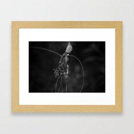 Batwing Plant (Tacca chantrieri) Framed Art Print