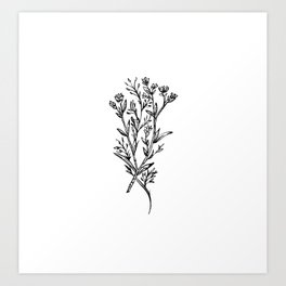 Meadow Wildflower Art Print