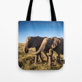 Two happy elephants walking together in African Savannah at sunset Tote Bag