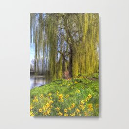Daffodils and Willow Tree Metal Print