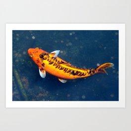 Orange Koi Art Print