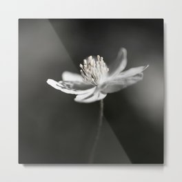 White Anemone Flower in Black And White #decor #society6 #buyart Metal Print