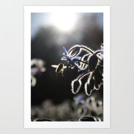 Honeybee & Borage Art Print