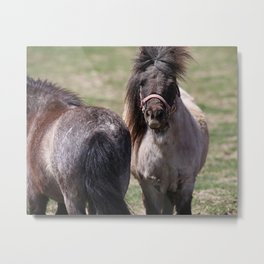 Heads Or Tails Mini Horses Metal Print