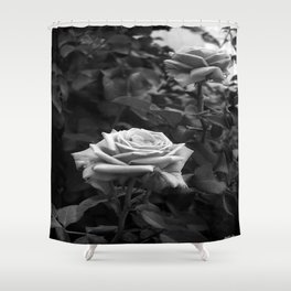 Pink Roses in Anzures 5 B&W Shower Curtain