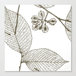 Leaves and Seeds Canvas Print