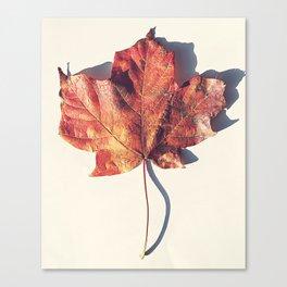Red Leaf 2 Canvas Print