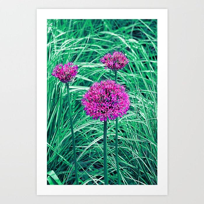 Purple ball flowers Art Print