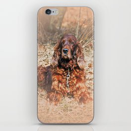 Red setter iPhone Skin