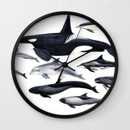 Delphinidae: Dolphin family Wall Clock