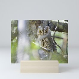 Small scops owl. Misteries of the forest Mini Art Print