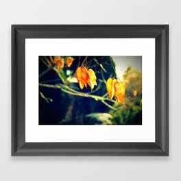 Winter Blossoms  Framed Art Print